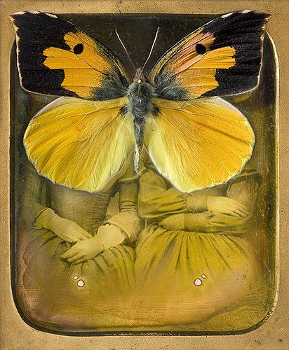 "fullbloom:  (via Jo Whaley | Lisa Sette Gallery) 57: Colias eurydice ~ archival digital print, 2007 24"" x 20"" or 10"" x 8"""