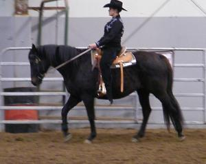 "Meet ""Belle"" a lovely Thoroughbred mare from Grandview, WA. Belle is an 18-year-old registered Thoroughbred and is 15.3hh, goes English or Western, easy to catch, leads, ties, longes, clips, bathes, and loads in trailers easily.Belle recently competed in her first show. She was fantastic! She will make a really nice show prospect for an advanced beginner."