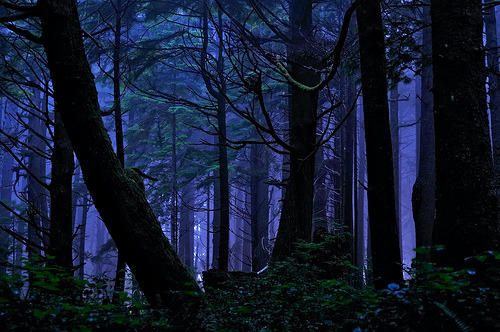 Rainforest Night Magic, Olympic National Park, Washington (by Fort Photo)