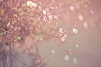 Retro Flowers by JoyHey on Flickr.