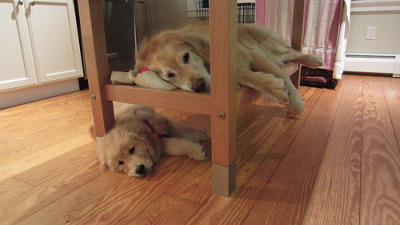 Bunk Beds! (by mswyni)