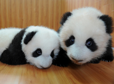 Dont be racist Be Like A Panda They're black and white and asian :)