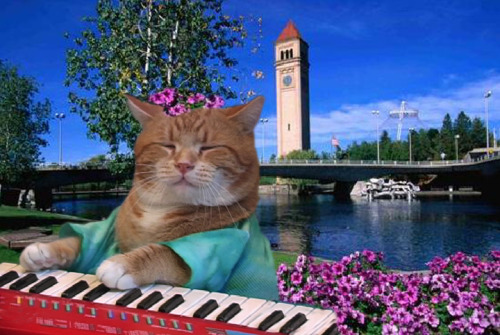 Check out the brand new official Keyboard Cat page on Facebook! http://www.facebook.com/pages/Keyboard-Cat/182507435136573