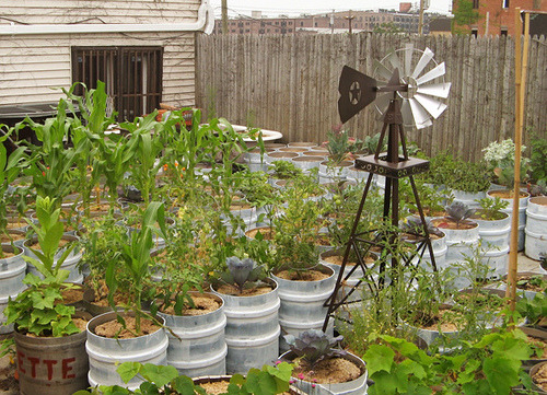 "Via storagegeek:  Awesome Rooftop Brewery Container Garden | greenUPGRADER ""The Brooklyn brewery Sixpoint Craft Ales features damaged kegs and reclaimed bathtubs full of edibles like eggplants, strawberries, leafy greens, corn,  potatoes, and melons. But they go beyond growing their own. The brewery  has a rainwater catchment setup and also keeps chickens."" I would eat here everyday if I could. I bet the food is amazing."