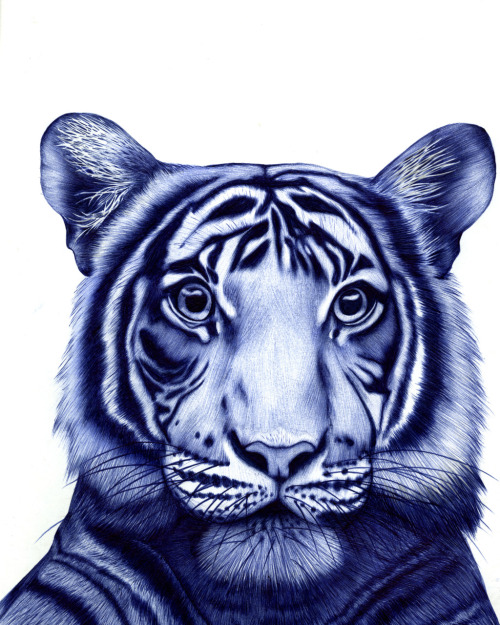 TIGER BLOOD biro pen © sarah esteje