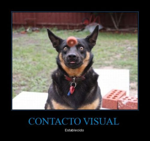 Visual Contact Established
