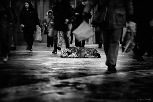"(via 500px / Photo ""Dog's Life"" by Denis Buchel)"