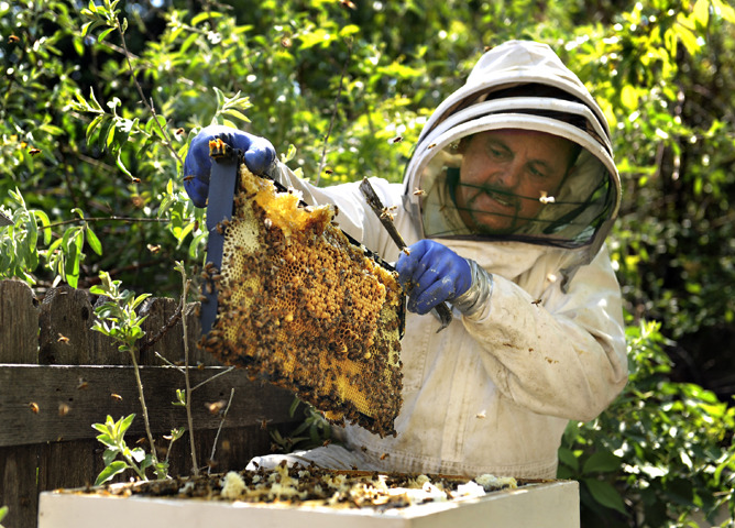 "Metro beekeeper Gregg McMahan leads a class Saturday on backyard hives. ""It's magical for people,"" he says of the cottage industry. The surge in urban beekeeping has been driven by women, experts say. McMahan would agree, as a majority of his students are women. (Photo by Karl Gehring, The Denver Post) From the story:  In 2006, honeybee colonies began to mysteriously vanish from the American landscape. Scientists gave the phenomenon a name — colony collapse disorder — and the U.S. Department of Agriculture set aside $20 million a year for five years to study it. There are still no answers to what is killing the bees."