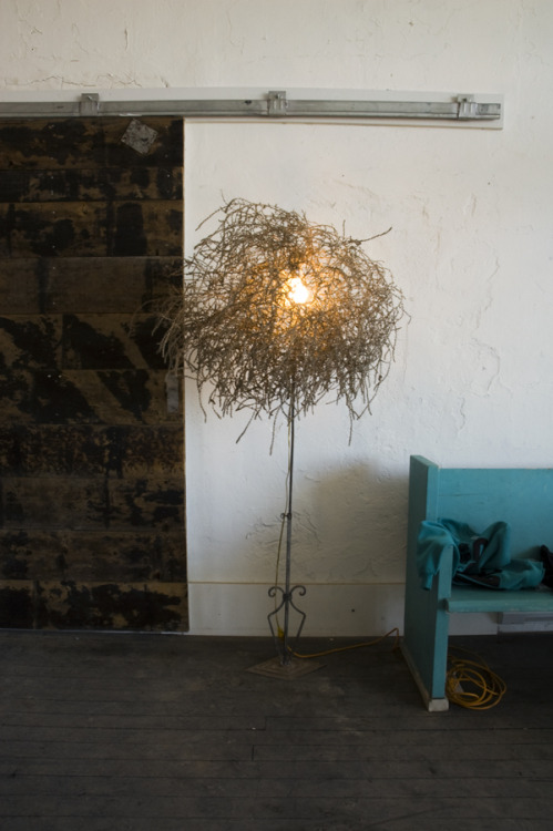 Tumblamp (tumbleweed from the San Raphael desert and custom lighting), starting at $100.