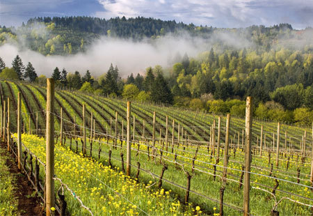placesiwouldgo:  Willamette Valley
