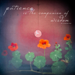 (via eyechai - blog - wisdom words: patience)
