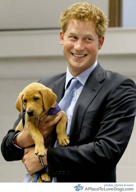 aplacetolovedogs:   cbc.ca Prince Harry holds a puppy named Veyron at the charity Canine Partners  Training Centre, in Midhurst, England, on July 13, 2010 Kirsty  Wigglesworth/Reuters Original Article