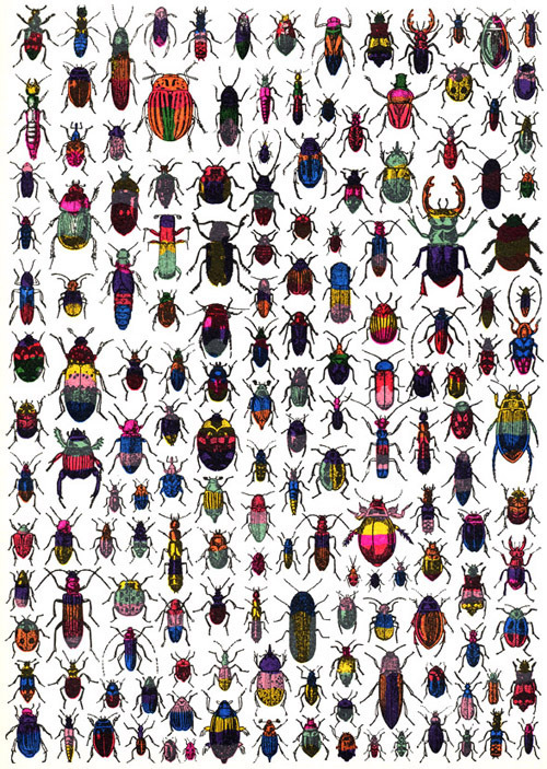 Beetles by John Dilnot