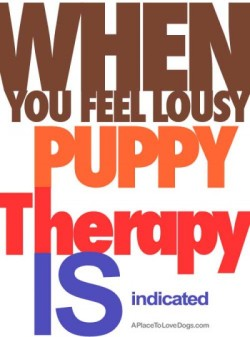 When you feel lousy, puppy therapy is indicated - Sara Paretsky Original Article