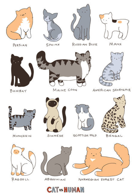 different Cat breeds illustration.  visit my blog at www.chikorimasou.blogspot.com