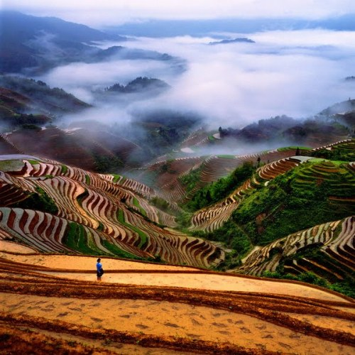 Stepped (terraced) hills overlook a misty valley in China (via Beautiful Photos of China | Golberz.Com)