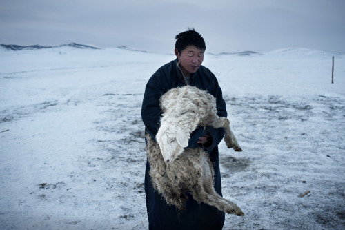 Batgargal Tsamba, 39, carries a sheep that didn't survive the night to the cemetery near their gher in Mongolia. (via)