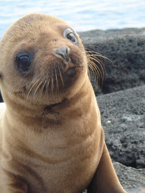"bright-eyesandstarryskies:  inkedwalls:  i saw a baby seal last weekend in auckland harbour when i was sailing. we called him squishy  ""I shall call him squishy. And he shall be mine. HE SHALL BE MY SQUISHY."" - dory, finding nemo"