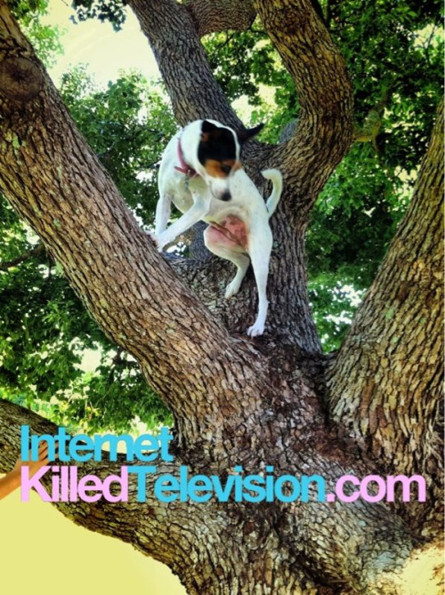 Ever see a dog climb a tree? I personally haven't until marley reeeeeally wanted a squirrel.