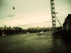 "sammi-j-photography:  ""Flying Free""London, England. SJ Photography. 2009."