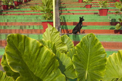 Dog Leaf - Varanasi by Jizzon on Flickr.