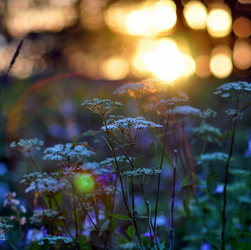 Midsummer | Flickr - Photo Sharing! on We Heart It. http://weheartit.com/entry/6580079