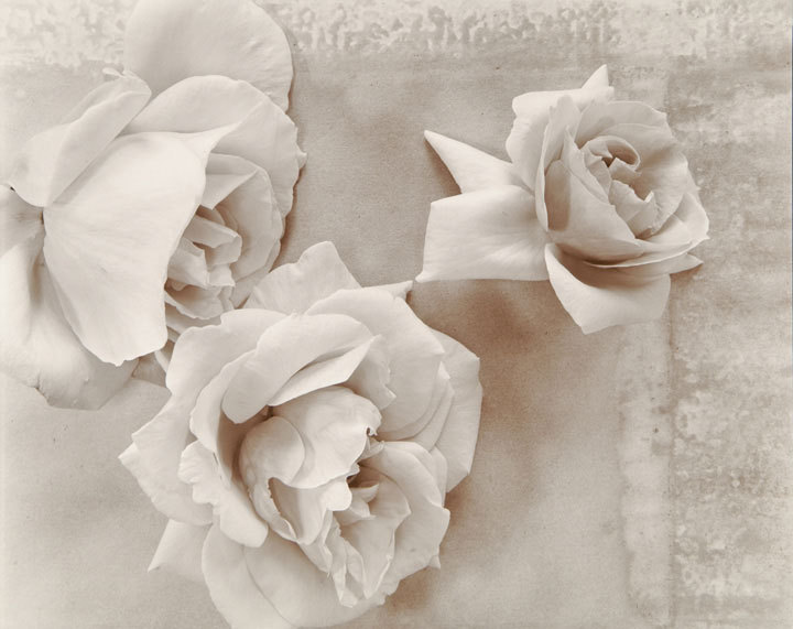 "Olivia Parker - Roses (from ""Lost Objects portfolio)"