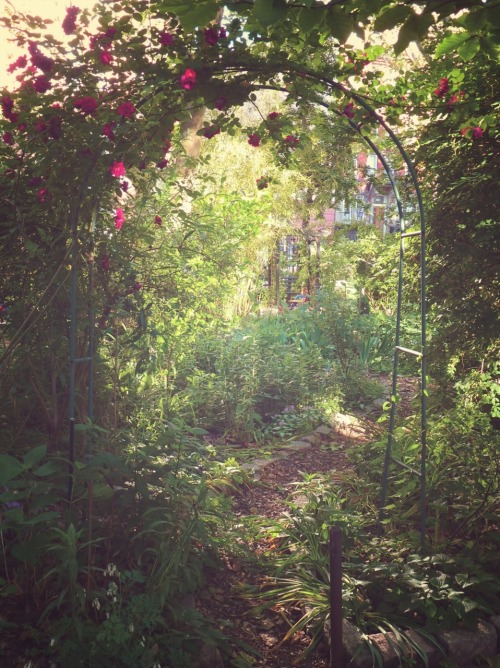 "nythroughthelens:  Rose trellis. M'Finda Kalunga Community Garden. Lower East Side, New York City. Buy ""Garden Paradise"" Posters and Prints here, View my store, email me, or ask for help."