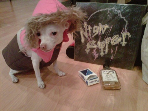 "hipsterpuppies:  coco fakes wheat gluten allergies because she heard they were ""in""  [via robin f]"