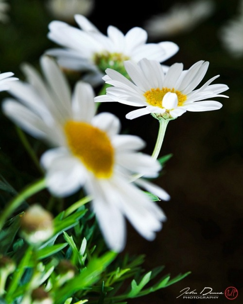 (via Three Crazy Daisies)