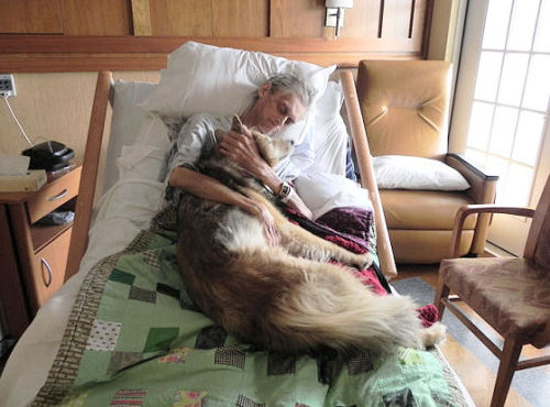 A picture is worth a thousand words… A dying man holding his best friend. He lived homeless in Iowa with his dog in a car. When he became terminally ill and placed in hospice, his only request was to hold his dog one last time before passing on. Two souls quietly saying their goodbyes.        (sigh)