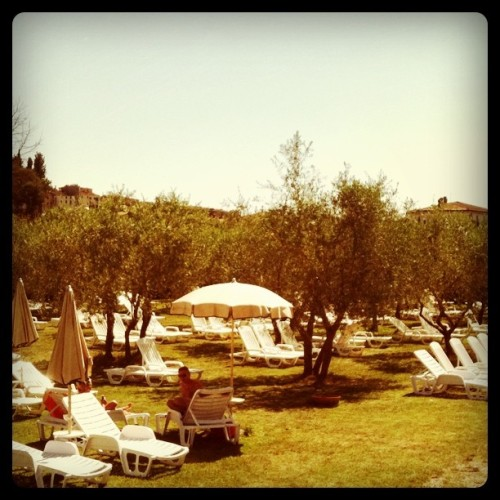 sunning in the olive grove (Taken with instagram)
