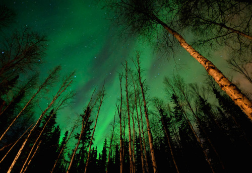 leighfallon:  The Northern Lights from the forest floor. So Beautiful.
