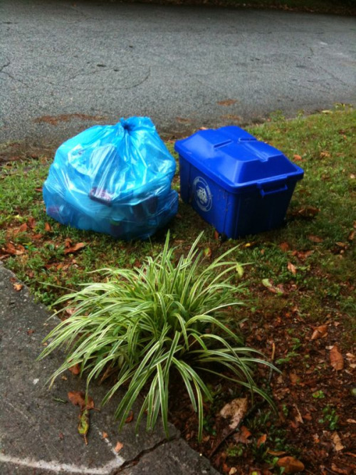 "Yeah! The recycling actually made it out to the curb today. As my husband said —""Finally!"""