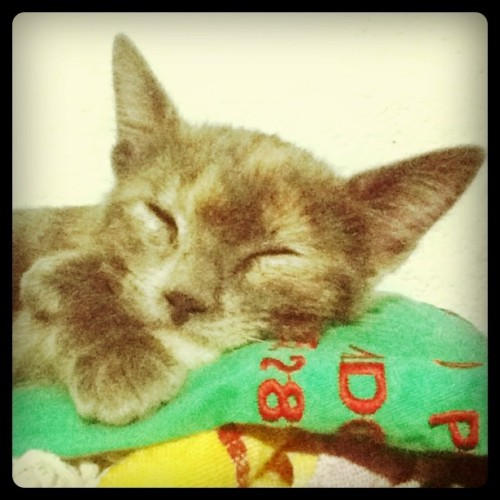 Kitten (Taken with instagram)