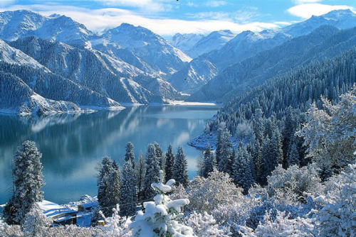 Tianshan Mountain Snow Spruce Forest, Xinjiang . China (via Most Beautiful Forests of China - Top Ten | China)