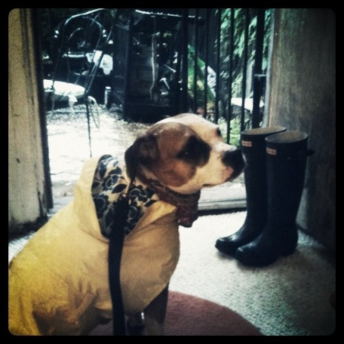 Dobby hates the rain (Taken with instagram)