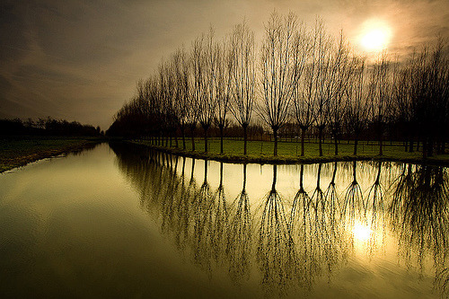 tigertears:  Thinking of Holland (by _Hans van de Vorst)