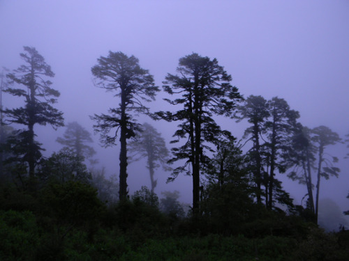 Trees in the mist in West Bengal, India (via East | TrekEarth)