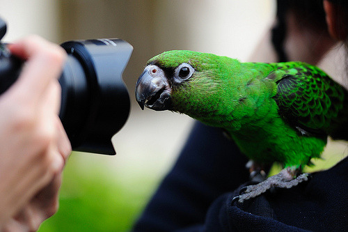Curious Parrot (by Photo-Bear)
