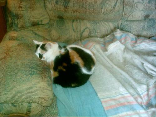 This is my baby, Patches. She'll have been gone for a year this October. I miss her with all my heart. She was 11 when she passed, and we'd had her since she was a kitten. She was a diva, but totally lovable. She loved curling up next to me, and especially loved taking naps with me. <3 I'm sorry for your loss :( She looks like such a snuggly ball of kitty <3