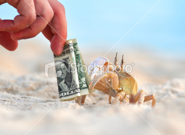 "Tourist Teasing Crab with Dollars The search: ""sand, fingers"""