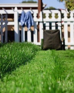 "Some telling facts about lawns: Researchers have recently discovered that chemicals released by freshly mown grass make people feel happy and relaxed, and may even  prevent mental decline in old age. Today, about 80 percent of all American homes have lawns. Lawns consume massive amounts of water—more than U.S. farmers use  to grow wheat, or corn, or any other agricultural crop.  A gas-powered mower emits as much pollution per hour as 11 cars.  Last week, school officials in Carlisle, Pa., turned over the district's  lawn care to a herd of hungry sheep, saving $15,000 a year in  landscaping costs. More facts from ""Blades of glory: America's love affair with lawns"""