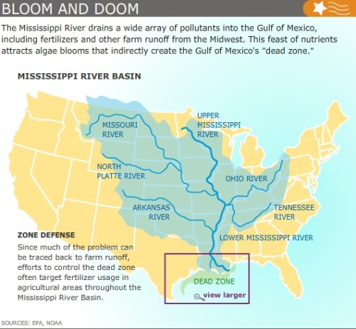 mothernaturenetwork:  What is the Gulf of Mexico dead zone?The giant, lifeless expanse appears every summer, but historic flooding along the Mississippi River could make 2011 a record-breaking year.