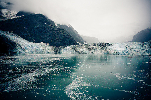 thecelution:  John Hopkins Glacier (by Calvin Sun)