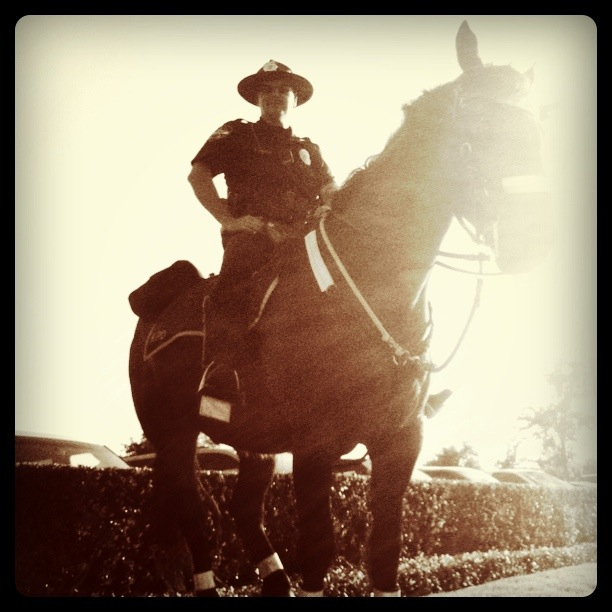 mounted officer  © i.m. morris jr