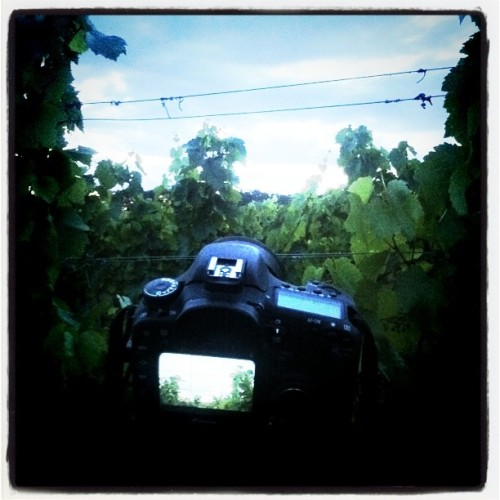 Shooting in the Winefield with 7D (Taken with instagram)