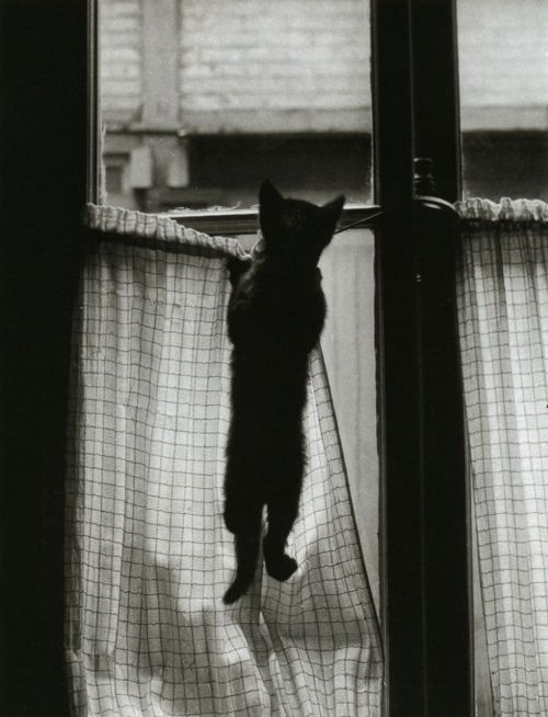 liquidnight:  Willy Ronis La Fenêtre Paris, 1954 From Les chats de Willy Ronis