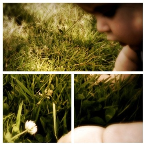 #baby #clover #grass #diptic #Qbro  (Taken with instagram)