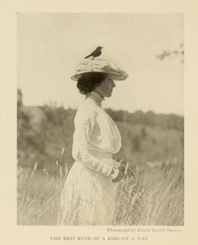 "I think I quite agree with the caption ""The best kind of bird on a hat.""  Fashions of the time had largely moved past the curious style of having practically an entire bird on the hat that was so popular at the beginning of the 20th century, but some smaller toques and day hats still featured long feathers.  A fashionable turn-of-the-century hat for the high-society lady of the East Coast of the United States:  Photograph from Book of Birds: Common Birds in North America. Produced by National Geographic, 1918."